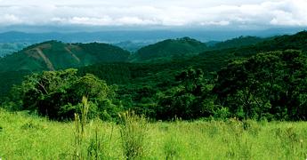 プロポリスに適したブラジルの自然